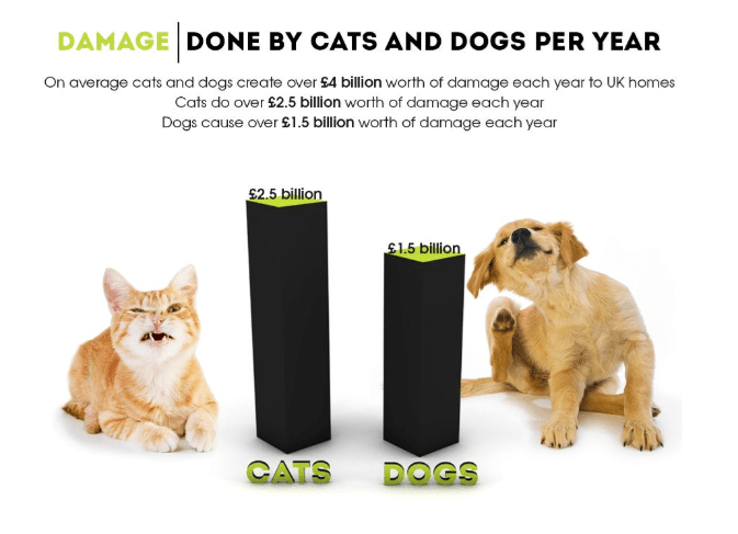 Canidae - DAMAGE DONE BY CATS AND DOGS PER YEAR On average cats and dogs create over £4 billion worth of damage each year to UK homes Cats do over $2.5 billion worth of damage each year Dogs cause over £1.5 billion worth of damage each year £2.5 billion 1.5 billion CATS