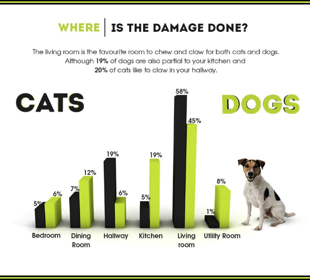 WHERE IS THE DAMAGE DONE? The living room is the favourite room to chew and claw for both cats and dogs. Although 19% of dogs are also partial to your kitchen and 20% of cats like to claw in your halway 58% CATS DOGS 45% 19% 19% 12% 8% 7% 6% 5% 59 1% Bedroom Dining Hallway Kitchen Living Utility Room Room room