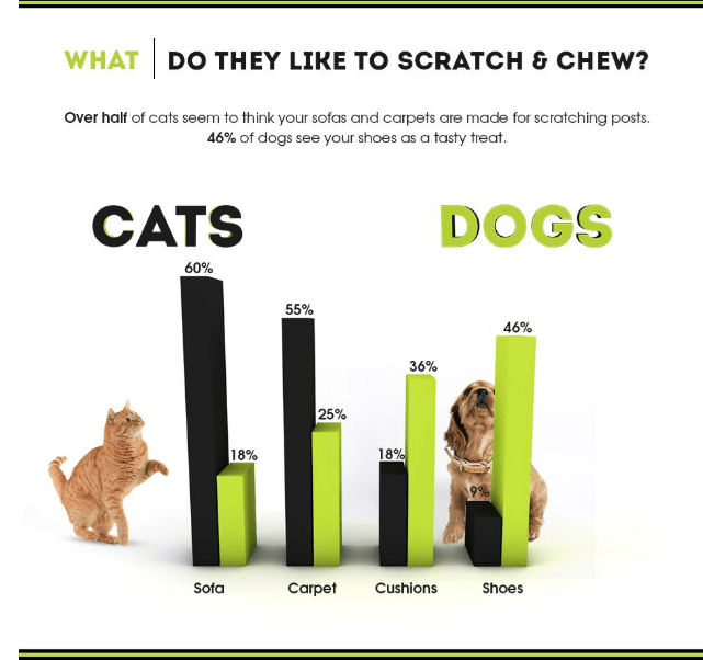 Product - WHAT DO THEY LIKE TO SCRATCH & CHEW? Over half of cats seem to think your sofas and carpets are made for scratching posts 46% of dogs see your shoes as a tasty treat. CATS DOGS 60% 55% 46% 36% 25% 18% 18% 9% Sofa Carpet Cushions Shoes