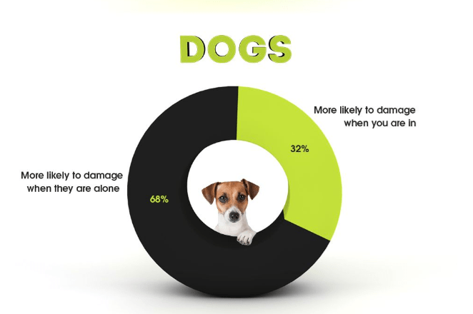 Product - DOGS More likely to damage when you are in 32% More likely to damage when they are alone 68%