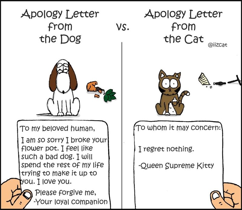 comics of cat vs dog