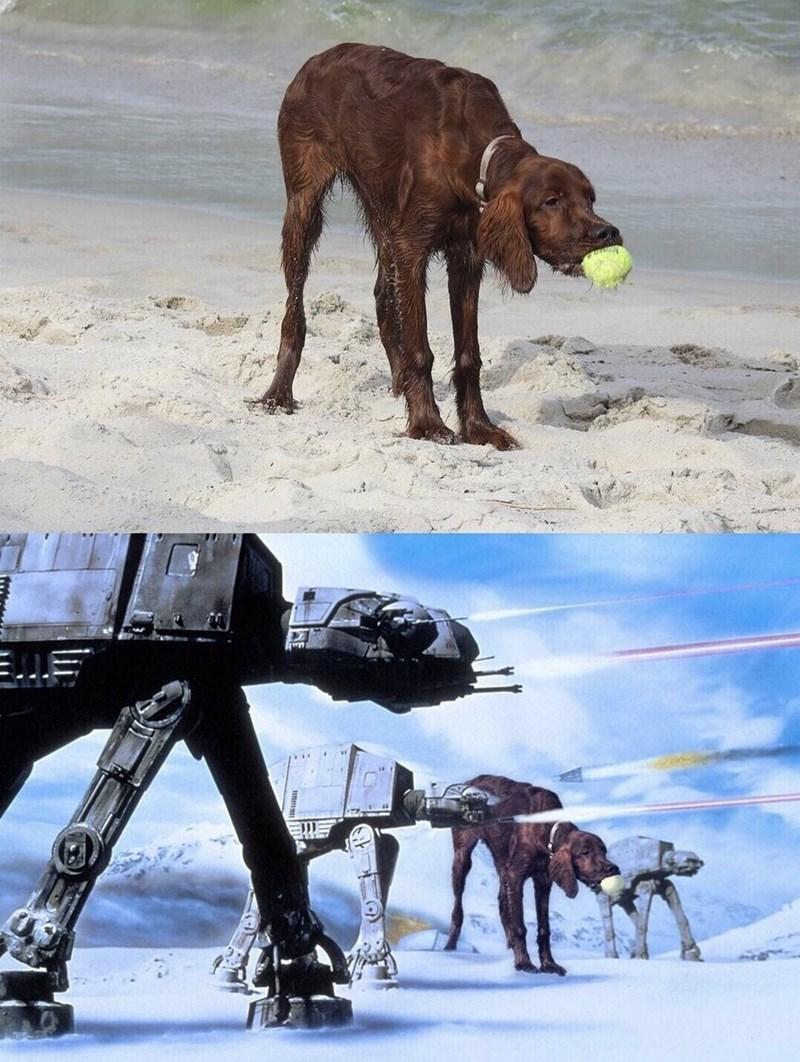 dog meme - Dog - un