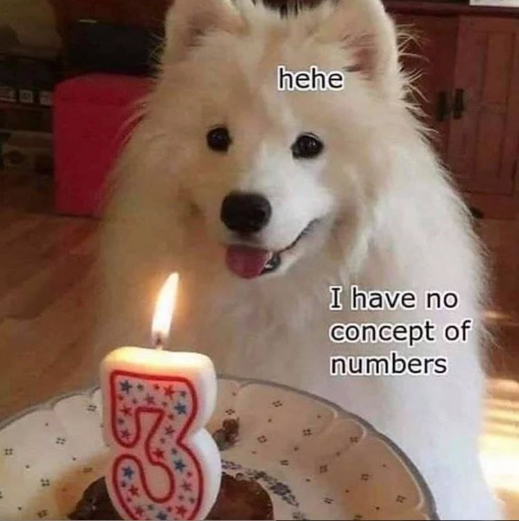 dog meme - Mammal - hehe I have no concept of numbers
