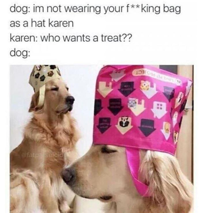 dog meme - Dog - dog: im not wearing your f**king bag as a hat karen karen: who wants a treat?? dog: fato suicid