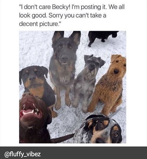"""dog meme - Dog - """"I don't care Becky! I'm posting it. We all look good. Sorry you can't take a decent picture."""" @fluffy_vibez"""