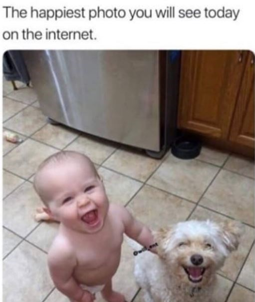 dog meme - Dog - The happiest photo you will see today on the internet.