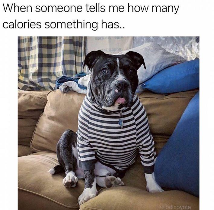 dog meme - Dog - When someone tells me how many calories something has... anto 0 @fodicoyote