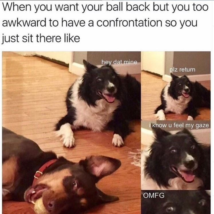 dog meme - Dog - When you want your ball back but you too awkward to have a confrontation so you just sit there like hey dat mine plz return i know u feel my gaze OMFG