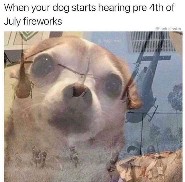 dog meme - Dog - When your dog starts hearing pre 4th of July fireworks @tank.sinatra Chdogga