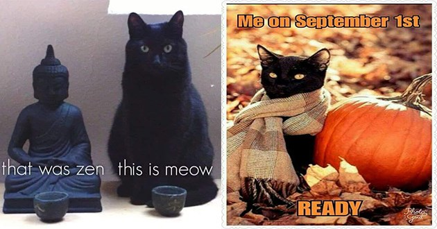 funny cat memes dump