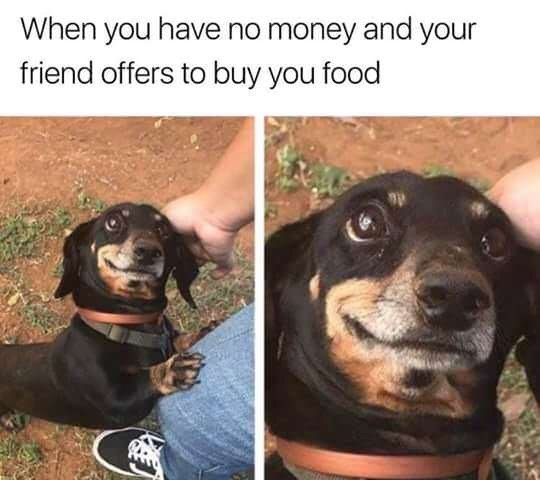 dog meme - Dog - When you have no money and your friend offers to buy you food