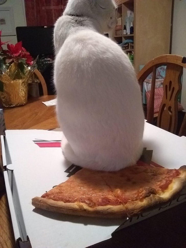 Cat sitting on pizza