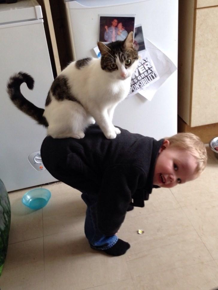 Cat - WE ES GRE ONSIBILI