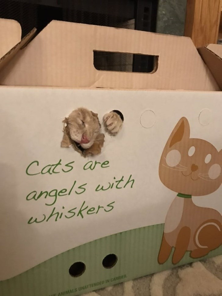 Box - Cats are angels with whiskers ANIMALS UNATTENDEO IN CARRIER