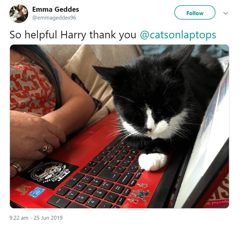 cat meme - Cat - Emma Geddes @emmageddes96 Follow So helpful Harry thank you @catsonlaptops de t up- on ta Special 5 9:22 am 25 Jun 2019 horsa end wonpacs 7