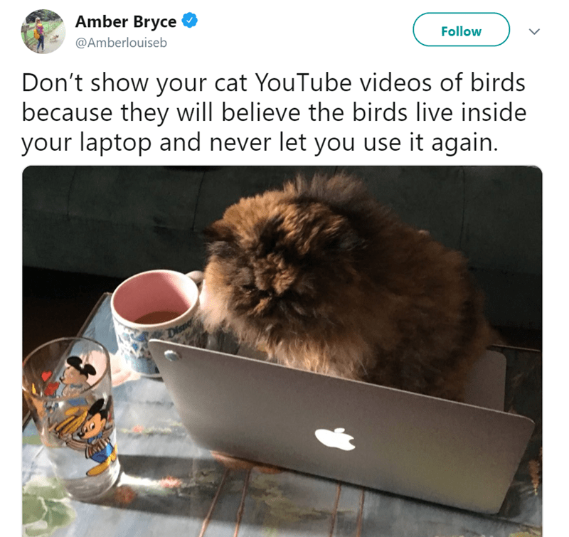 cat meme - Photo caption - Amber Bryce @Amberlouiseb Follow Don't show your cat YouTube videos of birds because they will believe the birds live inside your laptop and never let you use it again. Dispe