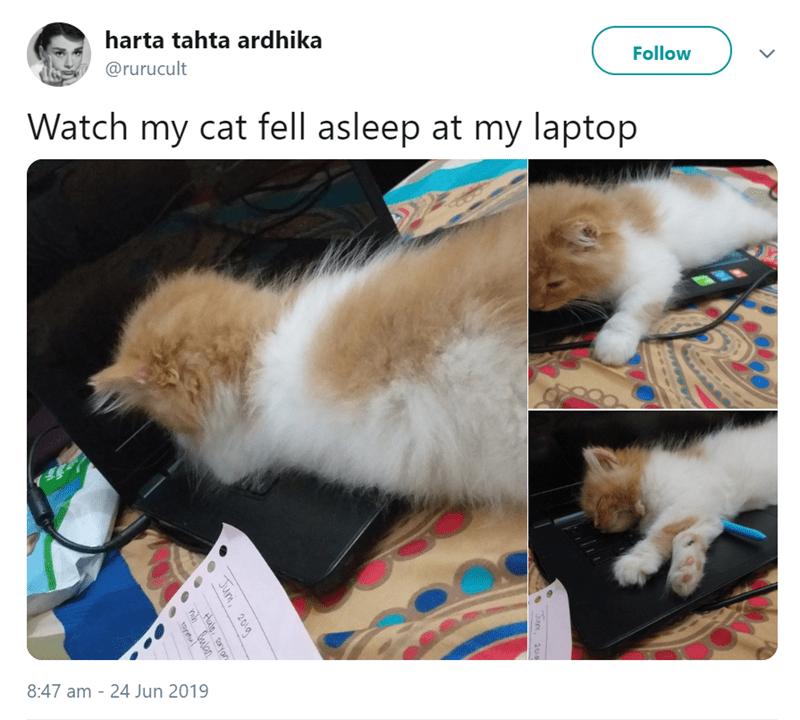 cat meme - Cat - Follow harta tahta ardhika @rurucult Watch my cat fell asleep at my laptop to an 8:47 am 24 Jun 2019 Jum, 2010 Jum Hale yan 2010