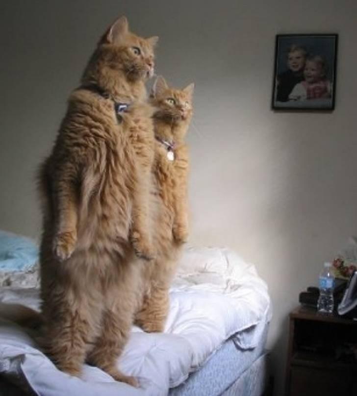reaction - Cat