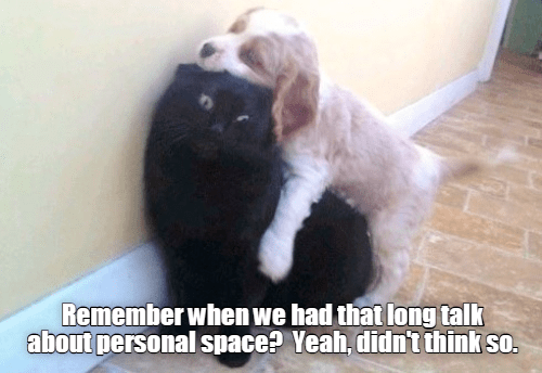 dog hugging a distressed looking cat
