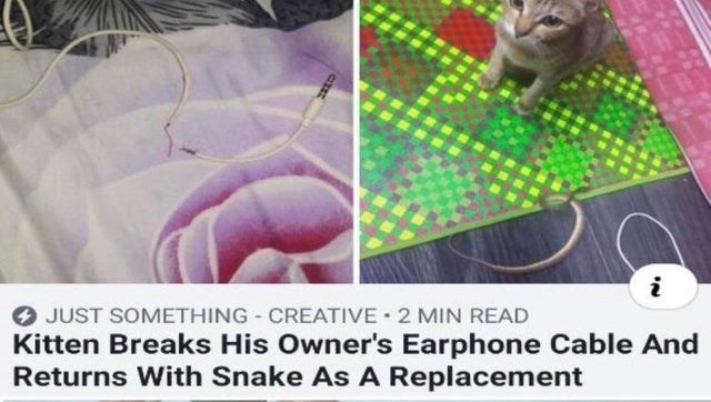 fail - Organism - i JUST SOMETHING CREATIVE 2 MIN READ Kitten Breaks His Owner's Earphone Cable And Returns With Snake As A Replacement