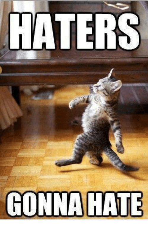 Cat - HATERS GONNA HATE