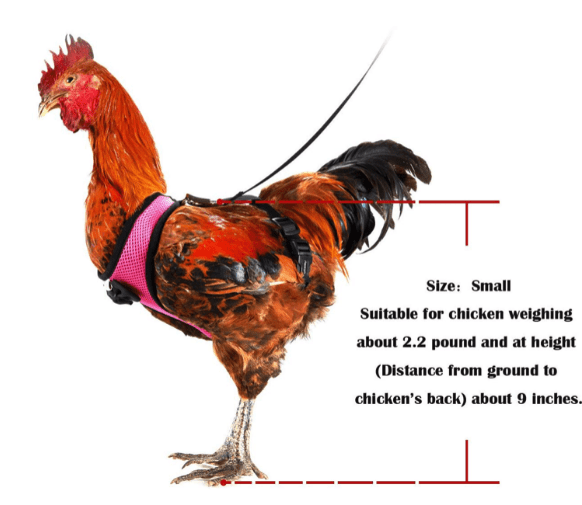 Chicken - Size: Small Suitable for chicken weighing about 2.2 pound and at height (Distance from ground to chicken's back) about 9 inches.
