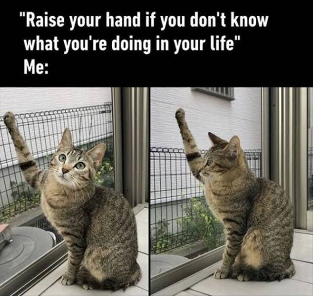 "Meme - Cat - ""Raise your hand if you don't know what you're doing in your life"" Me:"