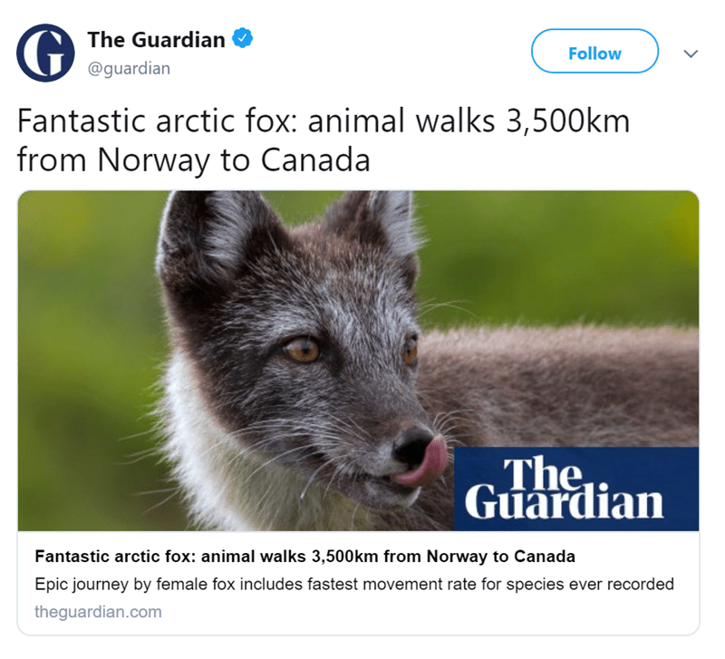 Wildlife - The Guardian Follow @guardian Fantastic arctic fox: animal walks 3,500km from Norway to Canada The Guardian Fantastic arctic fox: animal walks 3,500km from Norway to Canada Epic journey by female fox includes fastest movement rate for species ever recorded theguardian.com