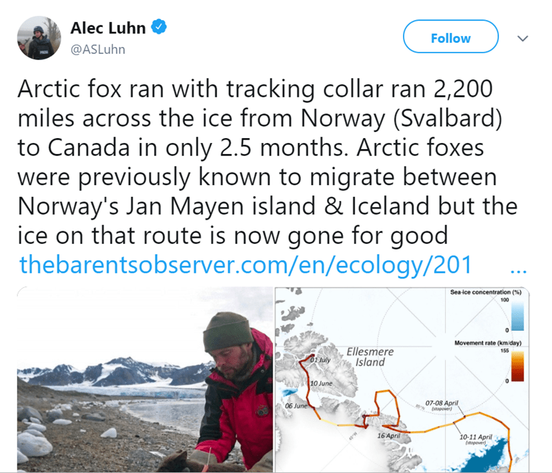Text - Alec Luhn Follow @ASLuhn Arctic fox ran with tracking collar ran 2,200 miles across the ice from Norway (Svalbard) to Canada in only 2.5 months. Arctic foxes were previously known to migrate between Norway's Jan Mayen island & Iceland but the ice on that route is now gone for good thebarentsobserver.com/en/ecology/201 Sea-ice concentration (% ) 100 Movement rate (km/day) g0vn Ellesmere Island 155 01 July 10 June 07-08 April (stopover) 06 June 16 April 10-11 April (stopover) 45W
