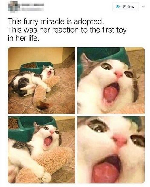 pics of a cat excitedly hugging a toy with each pic zooming in on its face