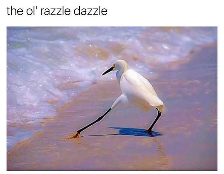 bird stretching its leg toward a wave of water