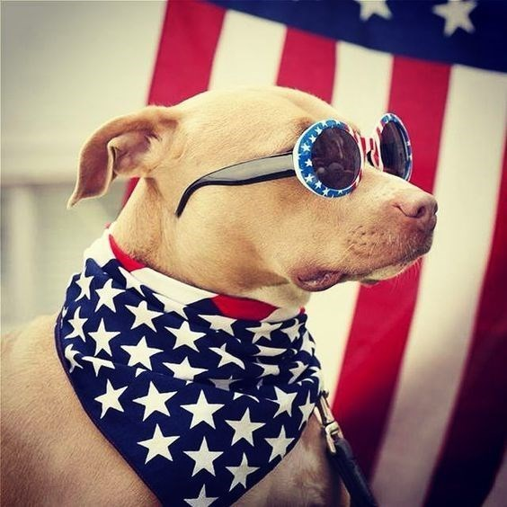 patriotic pet - Eyewear