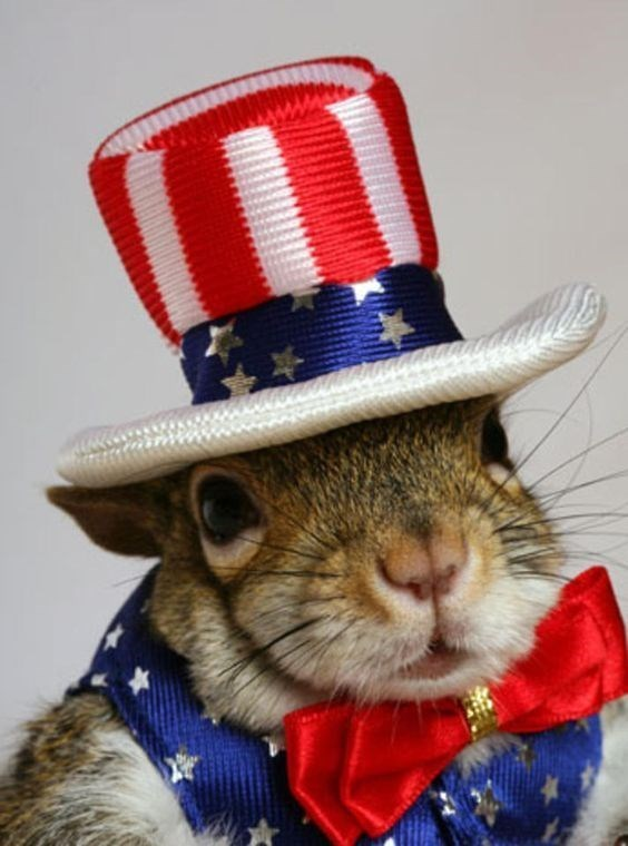 patriotic pet - Hat