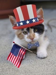 patriotic pet - Flag of the united states