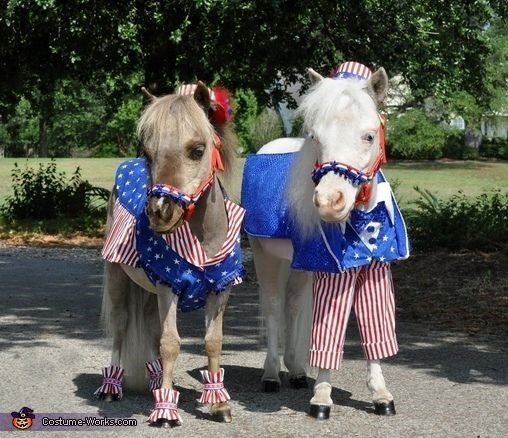 patriotic pet - Horse - Costume-Warks.com
