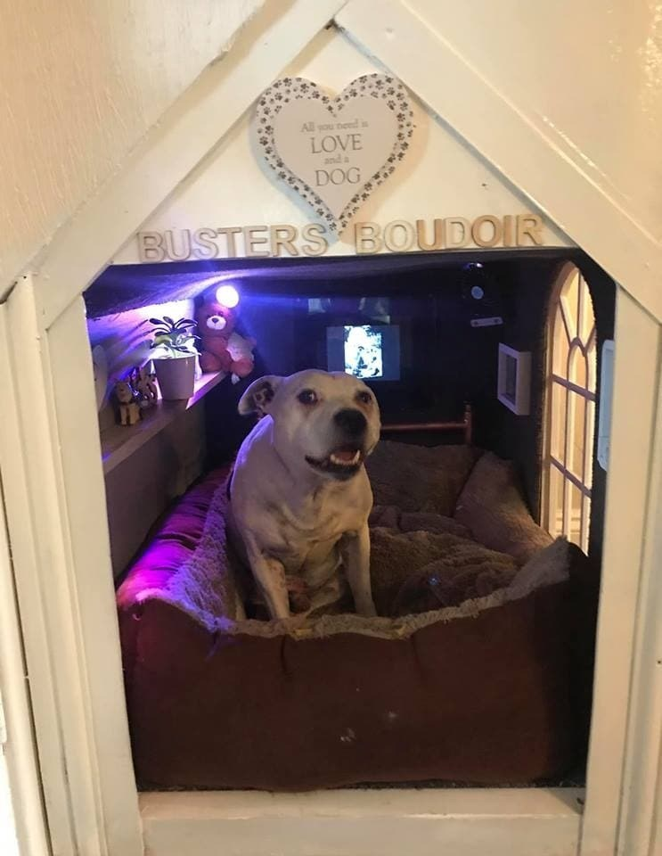 dog house - Canidae - All you need LOVE and a DOG BUSTERS BOUDOIR