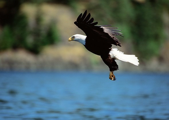 american animals - Bird