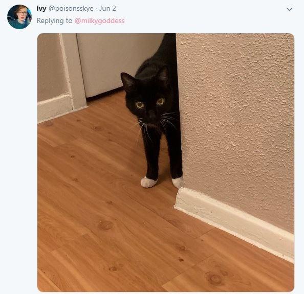 Cat - Cat - ivy @poisonsskye Jun 2 Replying to @milkygoddess