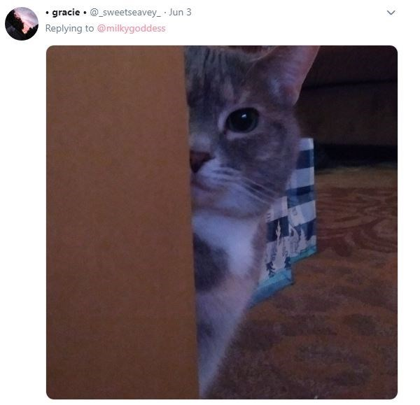 Cat - gracie sweetseavey Jun 3 Replying to @milkygoddess