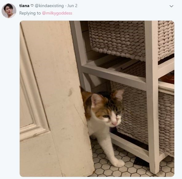 Cat - Cat - @kindaexisting Jun 2 tiana Replying to @milkygoddess