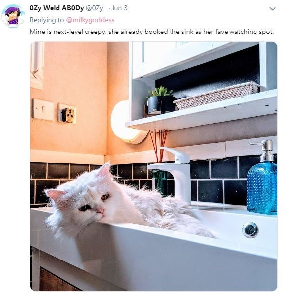 Cat - ozy Weld ABODy @0Zy_ Jun 3 Replying to @milkygoddess Mine is next-level creepy, she already booked the sink as her fave watching spot.