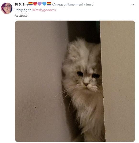 Cat - Bi & Shyi @megapinkmermaid Jun 3 Replying to @milkygoddess Accurate