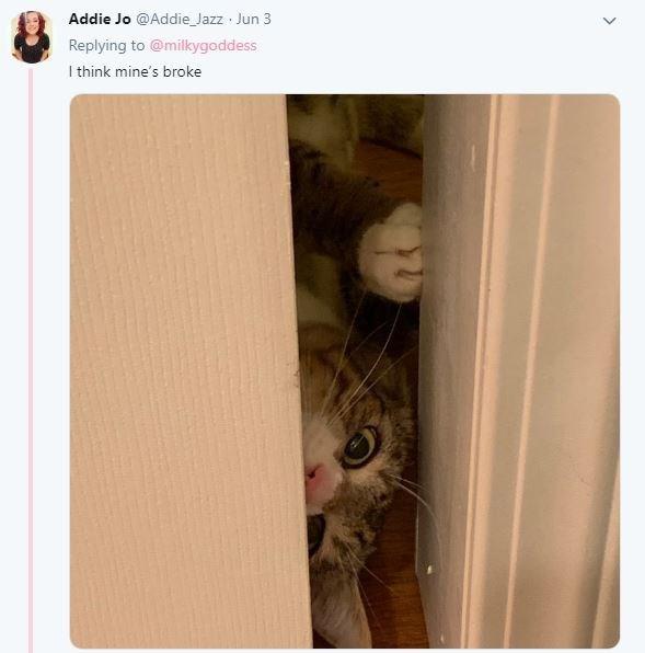 Cat - Addie Jo @Addie Jazz Jun 3 Replying to @milkygoddess I think mine's broke