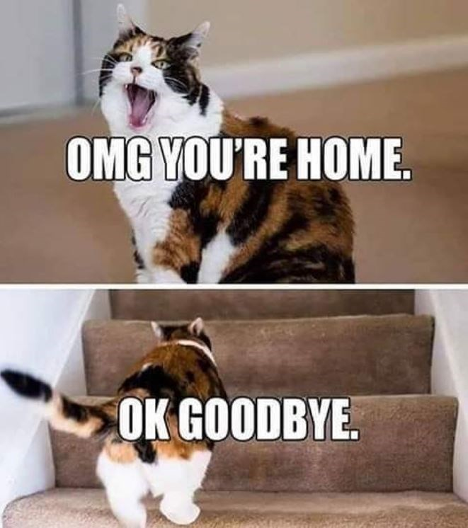 Facial expression - OMG YOU'RE HOME. OK GOODBYE