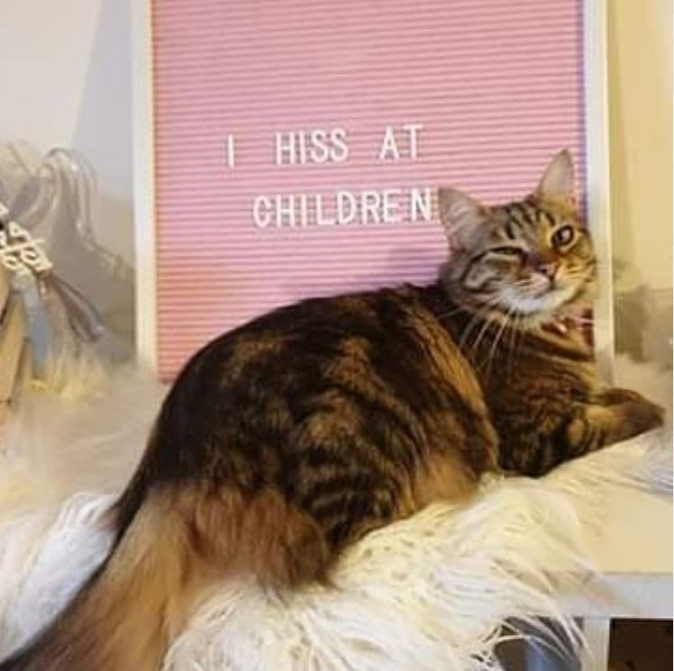 Cat - HISS AT CHILDREN