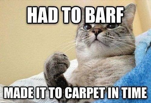 Cat - HAD TO BARF MADE IT TO CARPET IN TIME