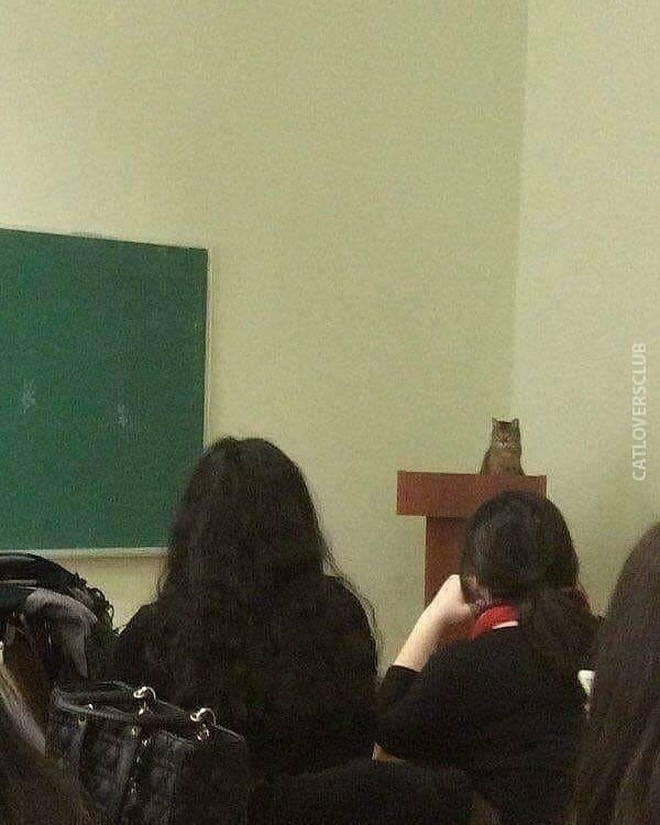 classroom cat - Room