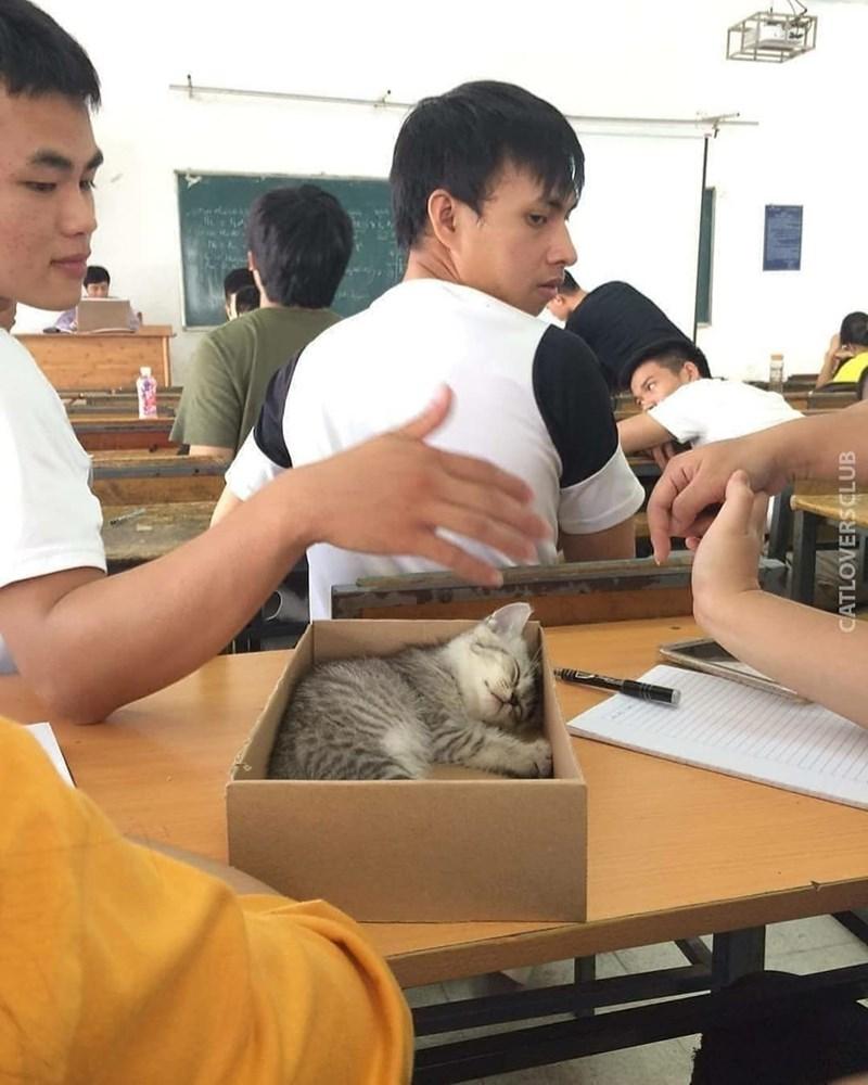 classroom cat - Room - CATLOVERSCLUB