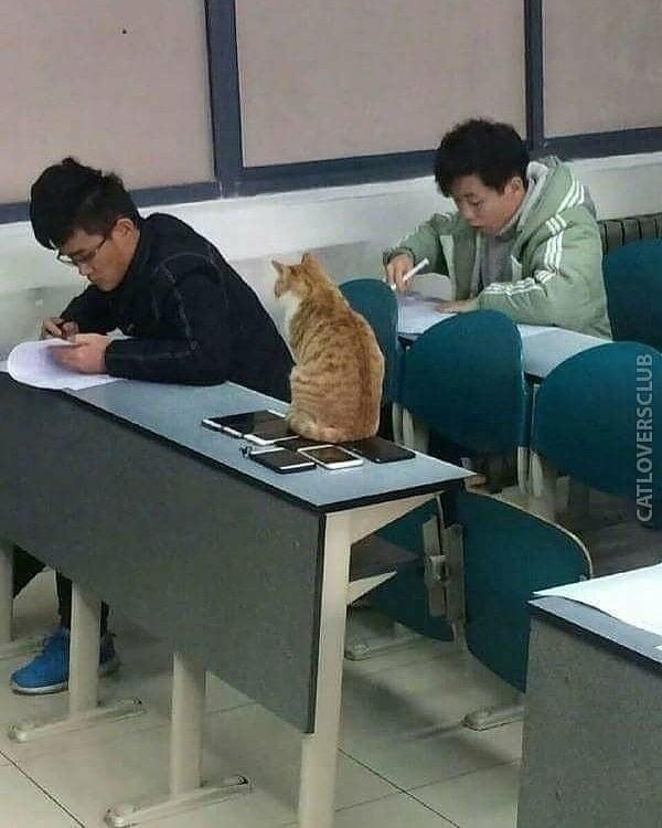 classroom cat - Table