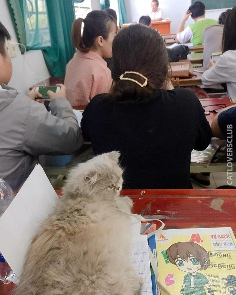 classroom cat - Fur - vO SACH A chu dep KACHU DKACHU clon MON CATLOVERSCLUB